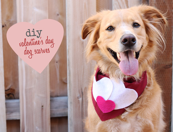 DIY Valentine scarf for dog