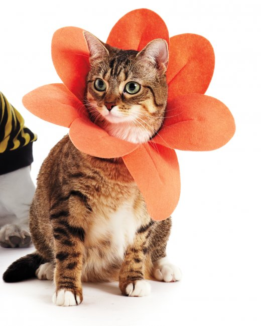 DIY Flower pet costume