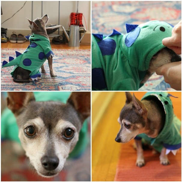 DIY dog dinosaur costume